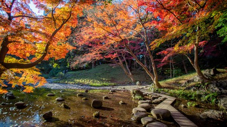 Koishikawa Korakuen is particularly stunning in autumn