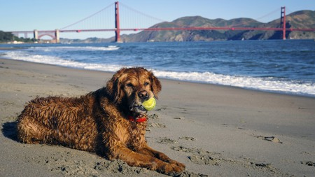 Pampered pooches are well attended to at these pet-friendly hotels around California