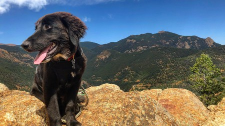 Colorado Springs offers plenty of hikes and pet-friendly hotels that make it a great place to visit with a four-legged friend