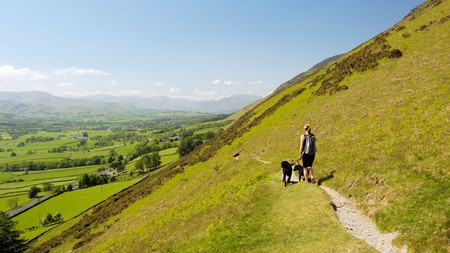 Take your pups along with you on a walk on the Scales Fell flank of Blencathra, Lake District National Park