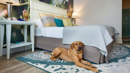 Soak up the Florida sunshine with your furry friend in one of the top pet-friendly hotels in Sarasota