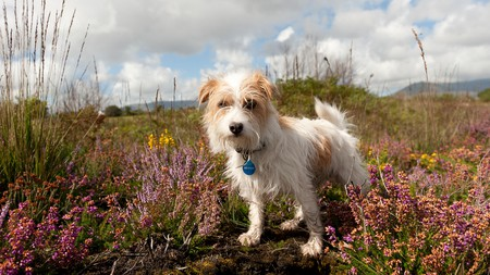 Explore Ireland together with your four-legged friend