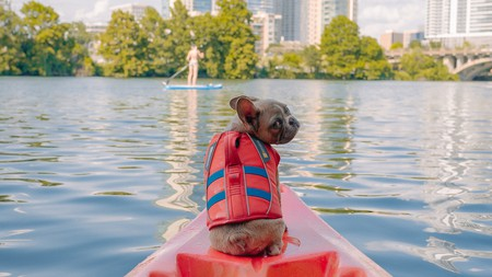 Don't leave your pets behind when vacationing in Texas