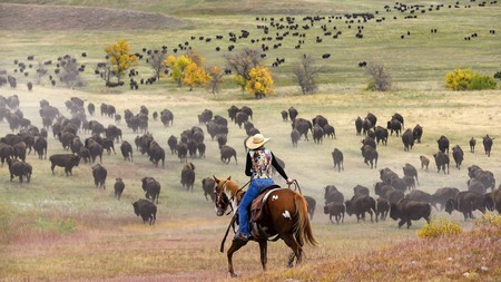 Watching the Custer State Park Buffalo Roundup is a once-in-a-lifetime experience