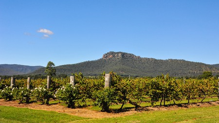 View of Werakata National Park from the Hunter Valley vineyards