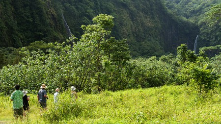People walking along in the Tahitian Jungle