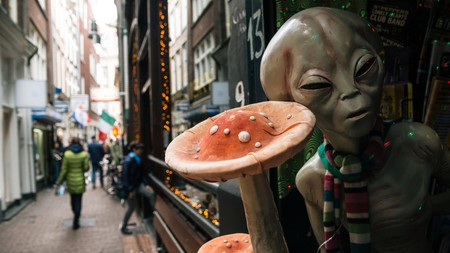 Find out all you need to know about taking magic truffles in Amsterdam