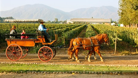 Visitors can tour Chile's wine estates by horse and carriage before settling down for a tasting of one its renowned vintages