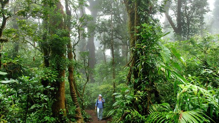 The Monteverde Cloud Forest Biological Reserve, in Costa Rica, is a unique experience