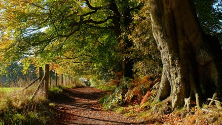 The woods in Alderley Edge provide an escape into nature close to Manchester