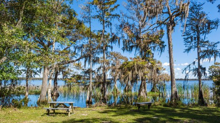 The picnic area at Lake Russell, in the Nature Conservancy Disney Wilderness Preserve, near Orlando