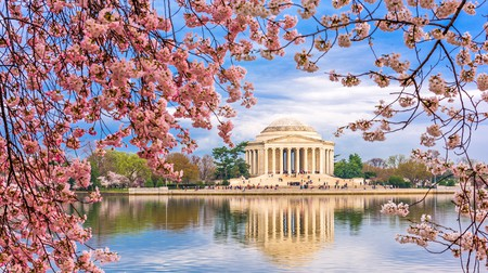 See the Jefferson Memorial in spring when the cherry blossoms bloom