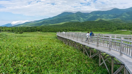 Head to Shiretoko National Park to see the resident population of brown bears