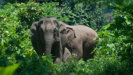 The elephants at Boon Lotts Elephant Sanctuary have been removed from work and abuse
