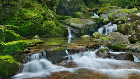 On your visit to Yakushima island, you can enjoy the Japanese art of shinrin-yoku, or forest bathing