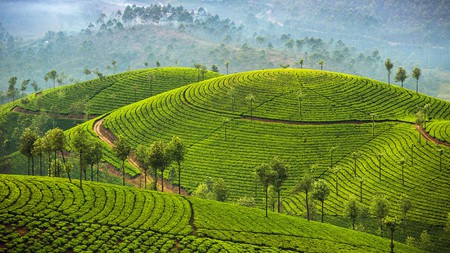 Many hotels in Munnar have scenic views of the surrounding tea plantations