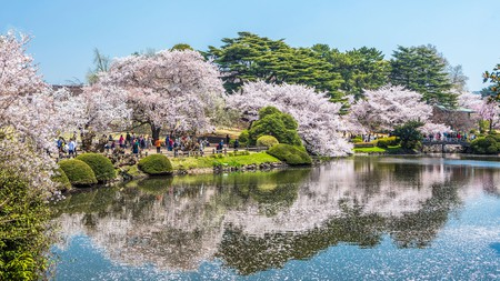 Cherry Blossoms in Shinjuku Gyoen-Park