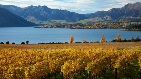 Lake Wanaka is one of New Zealand's unique wine producing areas worth exploring