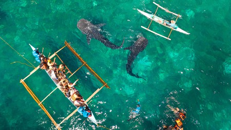 Head to Tan-awan, Oslob, for an opportunity to see whale sharks