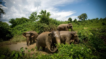 Asian rescue elephants at Boon Lott's Elephant Sanctuary in Baan Na Ton Jan, Thailand.