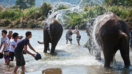 Don't miss out on washing the rescued elephants of Elephant Nature Park
