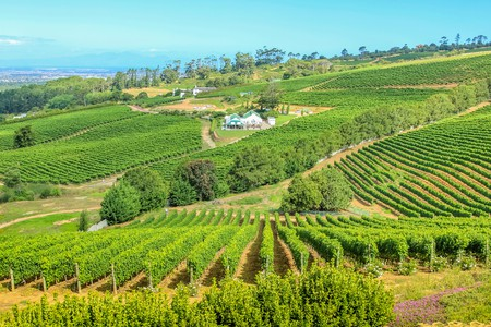Make sure you factor in a stop at some of South Africa's oldest vineyards in Constantia