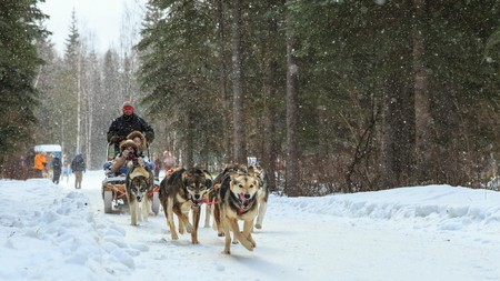 A dog-sled ride is one of the many activities on offer at Chena Hot Springs Resort in Fairbanks