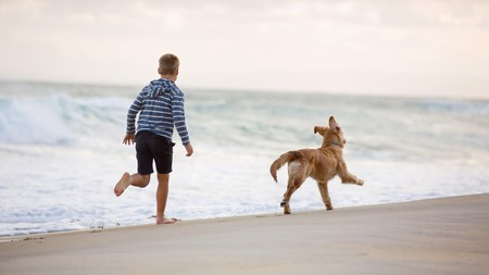 Visit Ocean City between October and April to frolic on the beach with your pup