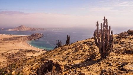 Pan de Azucar National Park sees the starkness of the Atacama desert rub up against the mighty Pacific Ocean