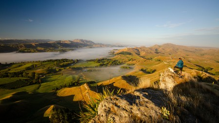 Take in the expansive views with your pup from atop Te Mata Peak, south of Hastings