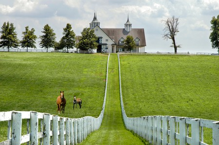 Kentucky Horse Park celebrates humanity's relationship with the horse and its special significance to the history of Kentucky