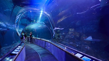San Francisco's Aquarium of the Bay offers an immersive tunnel experience