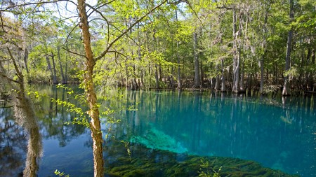 Manatee Springs State Park, in Florida, is one of many undiscovered gems in the Southeastern States