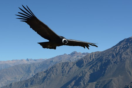 In the original operetta, the condor is a symbol of the freedom that exploited workers yearn for
