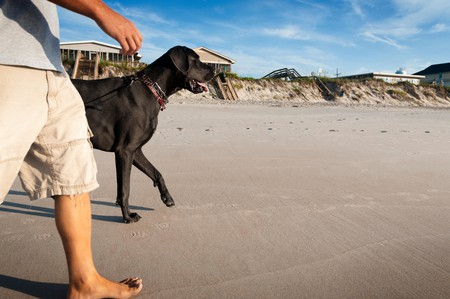 Both you and your four-legged friend can enjoy the beaches in the Outer Banks