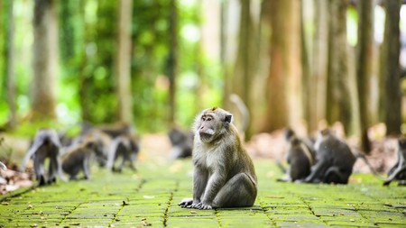 Come face to face with a long-tailed macaque on your journey inside the Ubud Monkey Forest