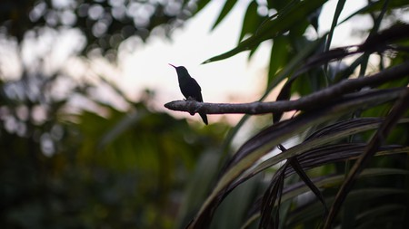 The Sierra Nevada de Santa Marta is one of the most important natural habitats in the world