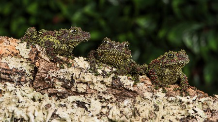 If you're lucky, you'll spot a mossy frog during your stay in Vietnam