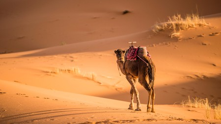 Go camel trekking through Jordan's desert of Wadi Rum and watch the sunset on yet another wonderful day in sandy paradise
