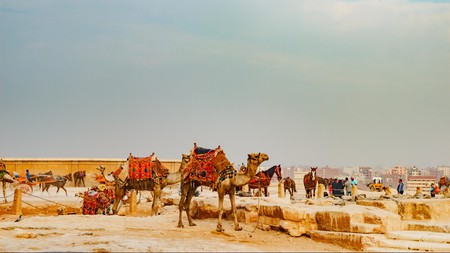 Go on a guided camel ride for a thrilling way to see the ancient Giza Pyramids