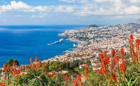 Enjoy scenic views across Madeira's capital city of Funchal among the abundance of flora and fauna on this magnificent island