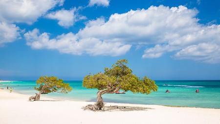 Divi Divi Trees are found across Aruba and remain a symbol of the island