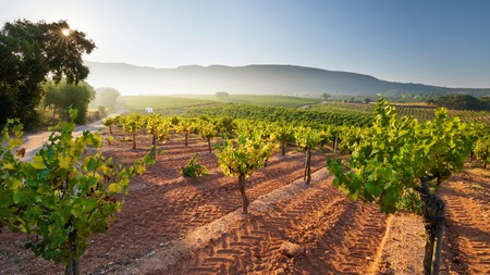 The vineyards near the town of Azeitao are often shrouded in mist of an early morning