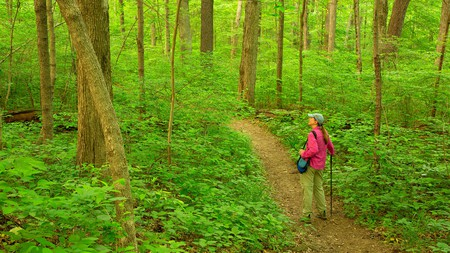 Hoosier National Forest, Indiana, is a paradise for hikers