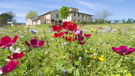 Connect with nature at Agriturismo Poggiacolle in San Gimignano