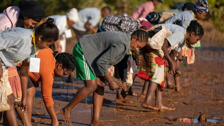 Since it was set up in 2007, Eden Projects, in Madagascar, has planted more than 407m mangrove and dry deciduous trees