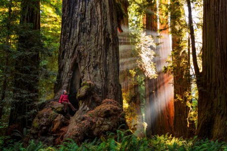 Spend the night amidst the awe-inspiring trees of Sequoia National Park