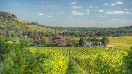 Denbies Vineyard Hotel offers spectacular views and a peaceful setting