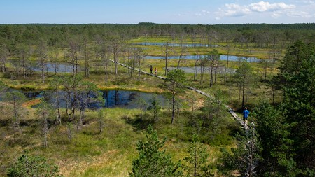 Swimmers can enjoy the fresh waters of Viru Bog in Lahemaa National Park until most of it freezes in the colder months