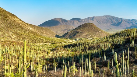 A visit to the Tehuacán-Cuicatlán Biosphere Reserve in Mexico is a must for nature lovers
